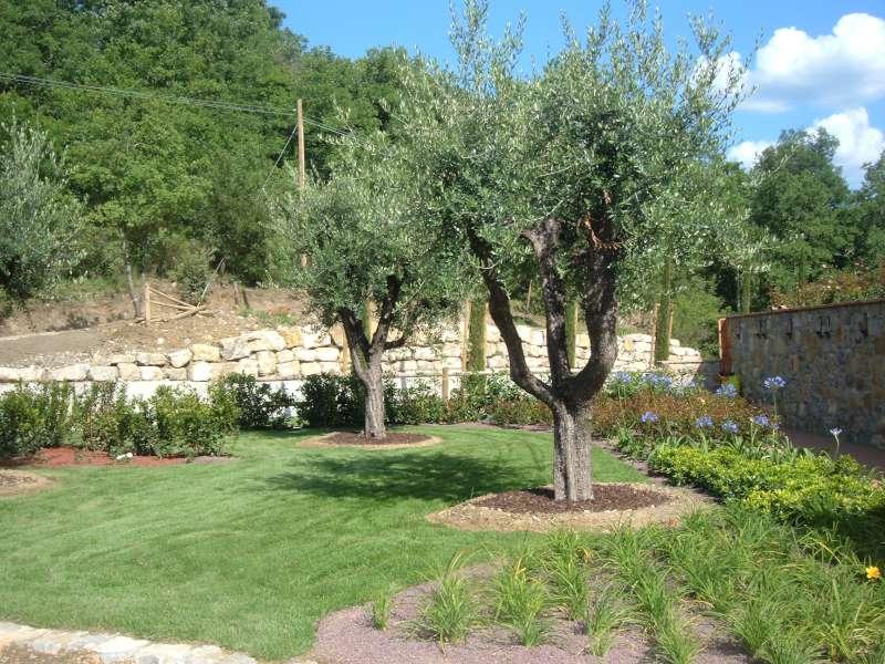 La finestra di stefania olivo pianta principe di toscana - Giardino con ulivo ...
