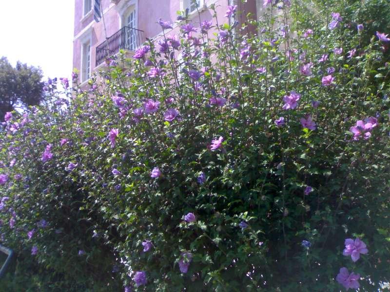 La finestra di stefania si cercato fiori viola pagina - La finestra viola ...