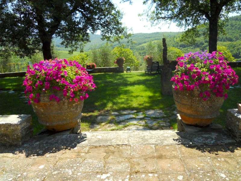 Piante Surfinie : La finestra di stefania fiori fioriture composizioni