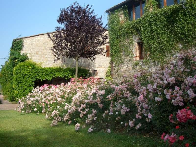 La Finestra di Stefania Quale è il mese giusto per potare le rose?