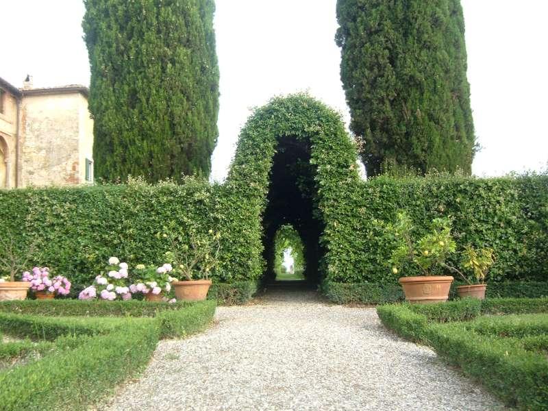 La finestra di stefania siepe e albero di leccio quercus - Alberi da piantare in giardino ...
