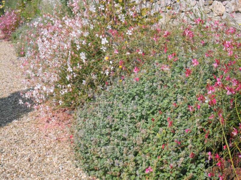 La finestra di stefania consigli giardino archivi pagina for Fiori perenni per bordure