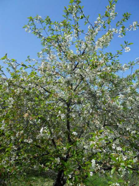 La finestra di stefania come piantare un frutteto e quali for Piante da frutto