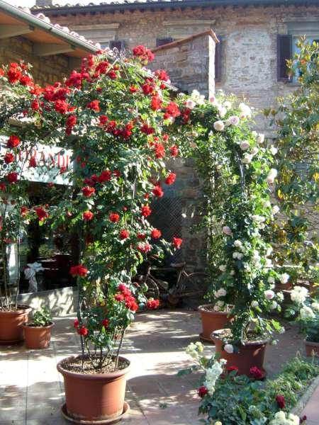 La finestra di stefania vasi con rose rampicanti la finestra di stefania - La finestra padova ...