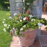 fiori più adatti da metter in un vaso o nel giardino