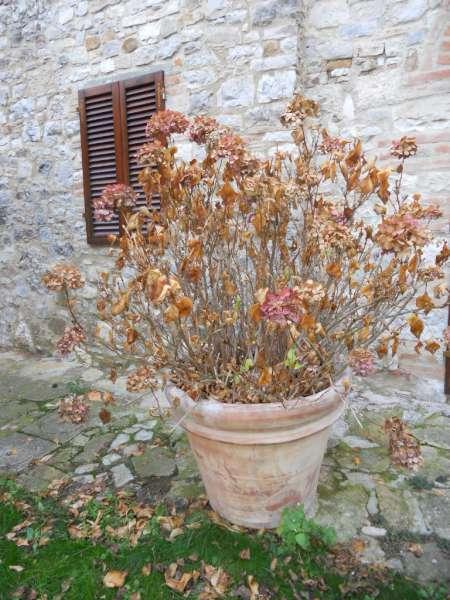 La Finestra di Stefania ortensia-in-autunno-fiori-e-foglie-secche.jpg - La Fi...