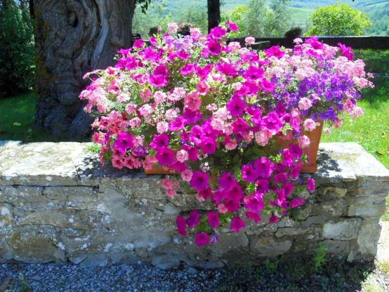 Preferenza La Finestra di Stefania Quali sono i fiori più adatti da mettere  GW86