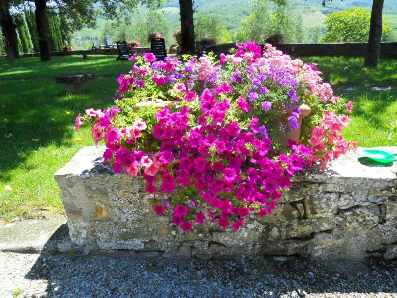 La finestra di stefania quali sono i fiori pi adatti da mettere in un vaso o nel giardino - La finestra sul giardino ...