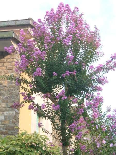La finestra di stefania come scegliere un albero da - Alberi da giardino di piccole dimensioni ...