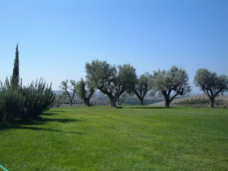 La finestra di stefania come scegliere un albero da - Piante mediterranee da giardino ...