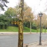 platano autunno
