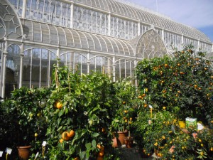 La finestra di stefania serra per agrumi limoni aranci for Giardino orticoltura firenze aperitivo