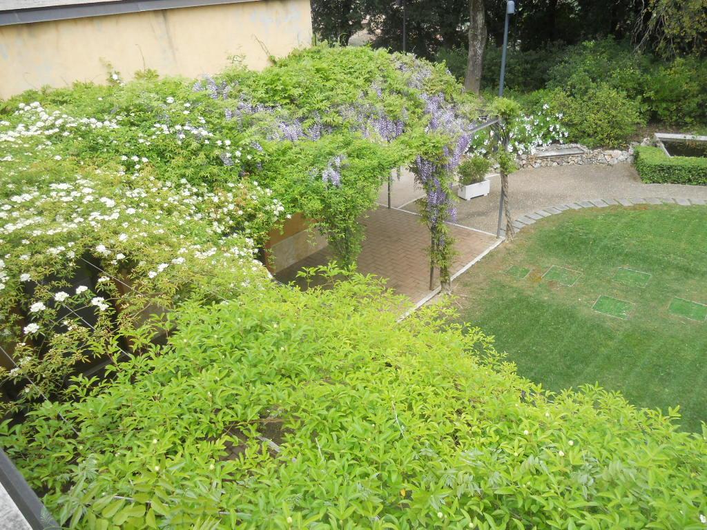 Piante da giardino pieno sole piante rampicanti da far for Vendita piante da giardino
