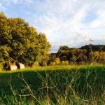 paesaggio-toscano-autunno