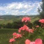 rose che stanno bene in Toscana
