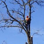 potare gli alberi senza scale