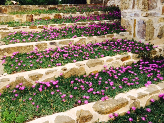 La finestra di stefania resistenti al freddo archivi la for Cespugli fioriti perenni resistenti al freddo