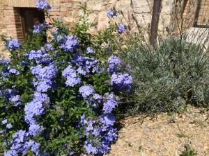 blu garden idea