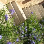 che piante mettere vicino alle scale