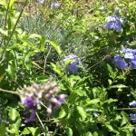 storia d'amore in giardino