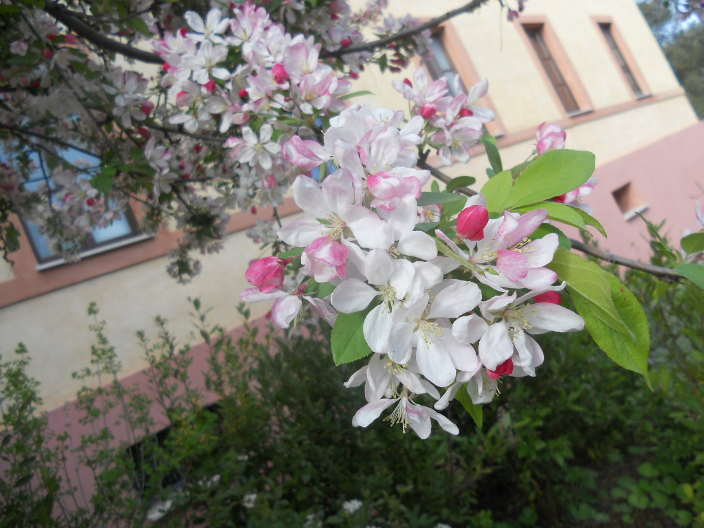 Pianta con fiori a grappolo fiori idea immagine for Fiori bianchi profumati a grappolo