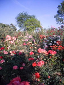 Tutte le varietà di rose del mondo