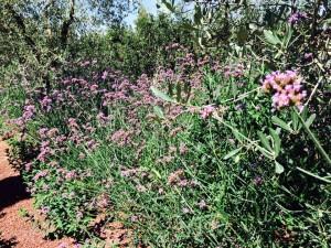 aiuola con piante rustiche