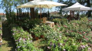 esposizione di piante a Lucca