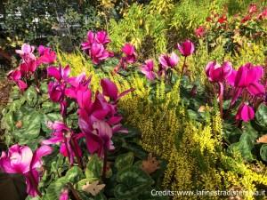 idde per composizioni con fiori invernali