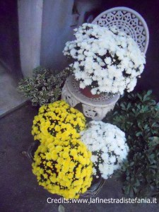 i crisantemi tolti dal cimitero si piantano in giardino