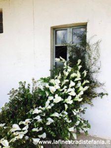 composizioni floreali con calle bianche, Floral compositions with white calle