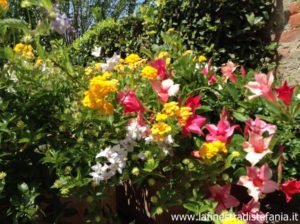 fiori con poca manutenzione, Unusual flower arrangements