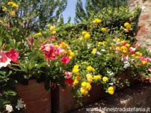 fiori alternativi alle petunie surfinie, quoi planter dans des pots de fleurs autonettoyantes