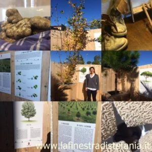piante dove nascono i tartufi, plants where truffles are born