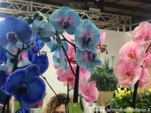 come riprodurre le orchidee, how to reproduce orchids