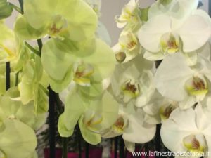 come fare le talee con le orchidee, how to make cuttings with orchids