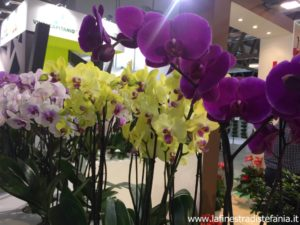 quante sono le varietà di orchidee, how many are the varieties of orchids