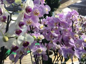 orchidee dai colori pastello, orchids in pastel colors