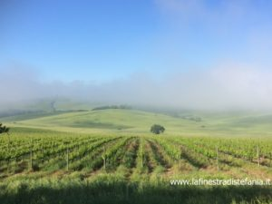 vigneti del Chianti Classico, turismo, Marketing, wine