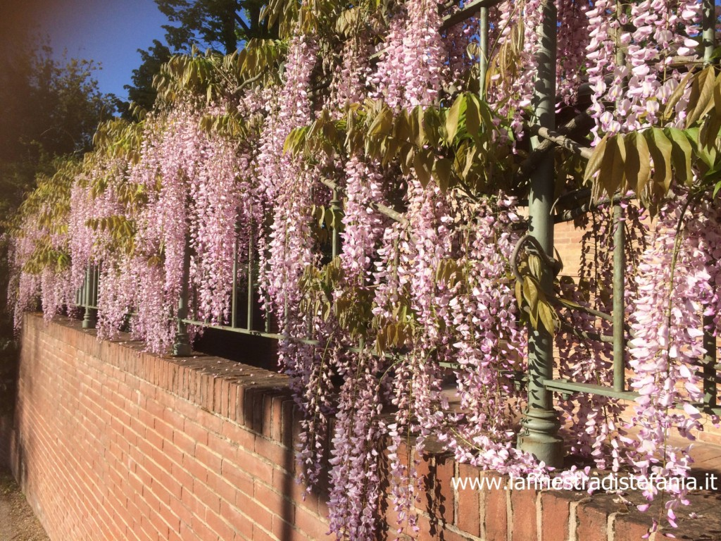 ringhiere con fiori rampicanti rosa, railings with pink climbing flowers
