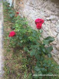 la storia della rosa di Paestum