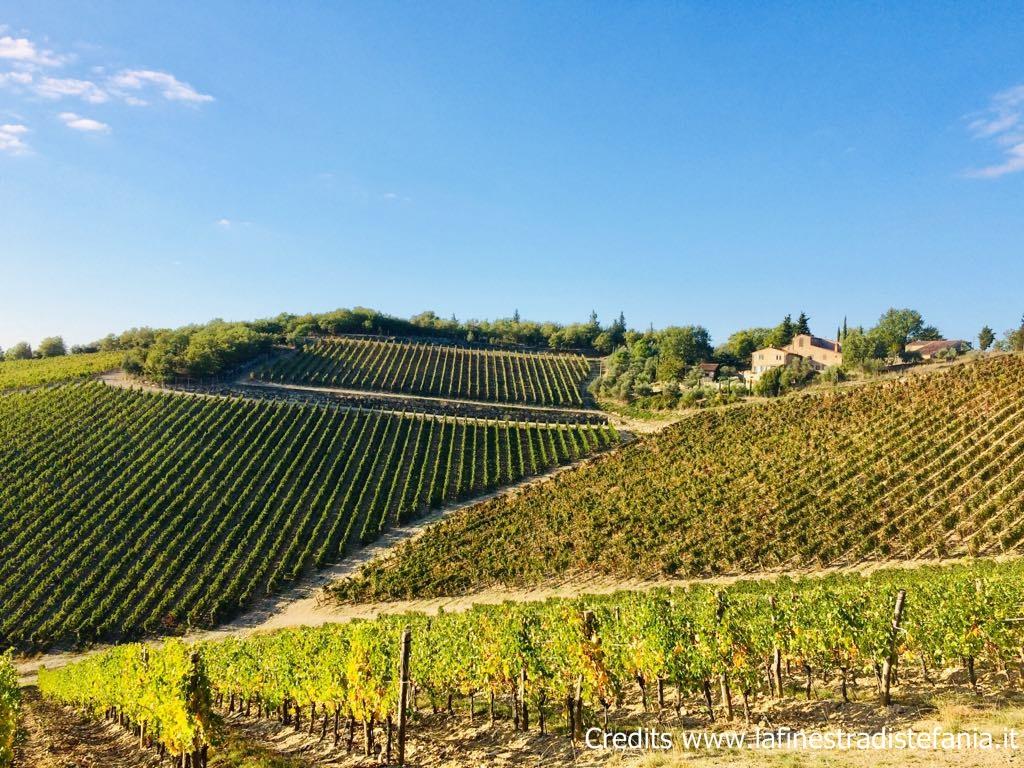 Terre di Gaiole, le aziende vinicole del territorio