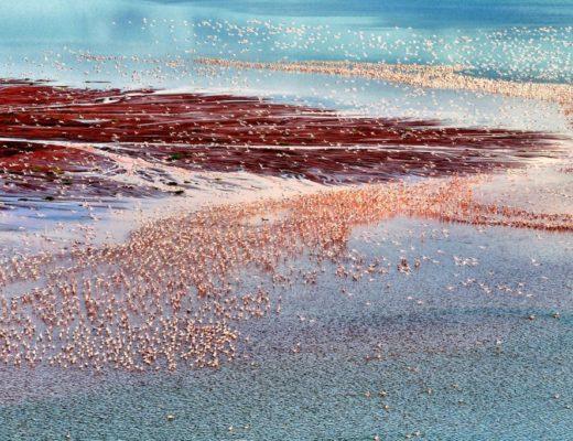 Siena International Photo Awards, One million flamingos di Franco Cappellari