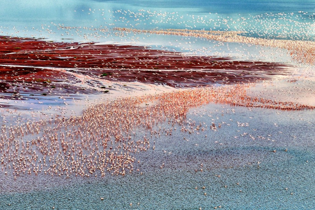Siena International Photo Awards, One million flamingos di Franco Cappellari