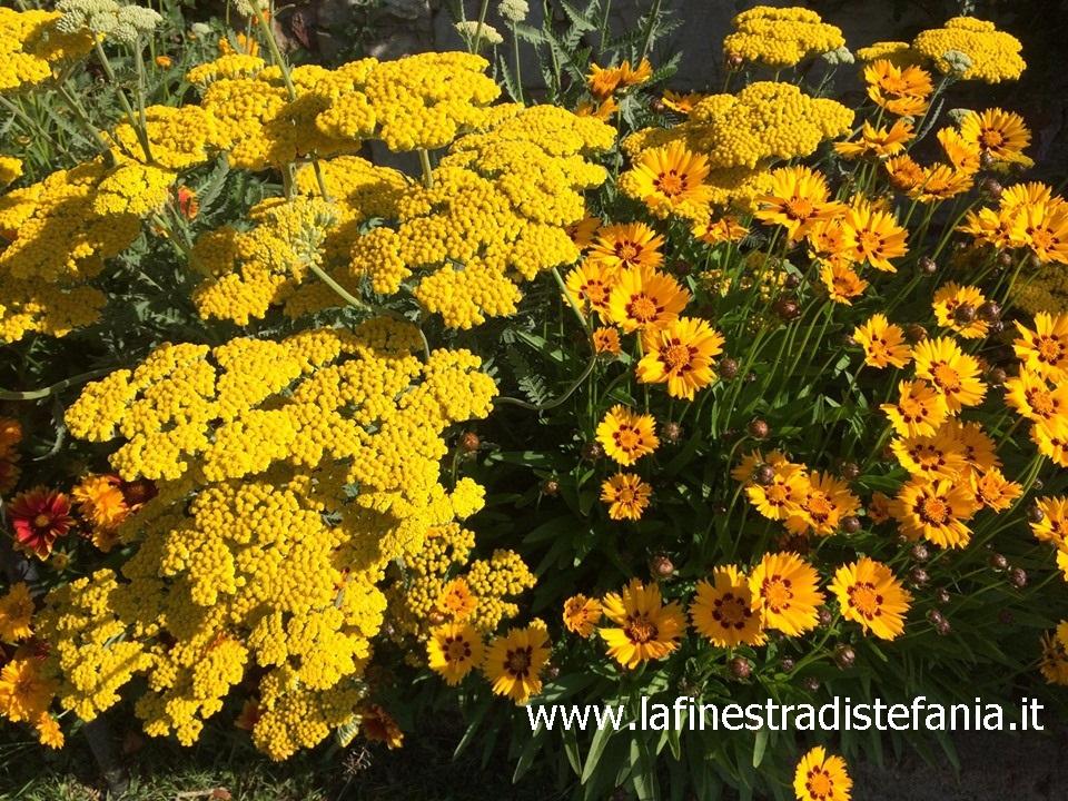 achillea-e-altri-fiori-gialli-per-il-giardino.jpg