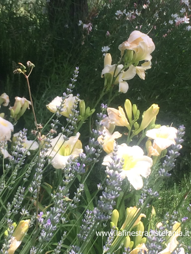bulbi-che-fioriscono-alla-fine-dell'estate.jpg